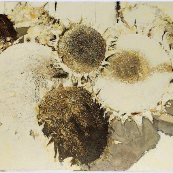 Sunflowers life